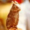 sushiflop: (owl; precious little angel.)