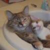 yarroway: (kitty sink)