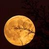 hell_in_highheels: (full moon)