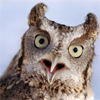 wist: (owl gasp)