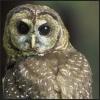 olyabird: (owl)