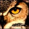 olyabird: (eye)