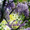 lilachigh: (lilac2)