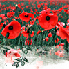 lilachigh: (poppies)