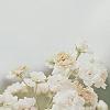 paloma: (flora)