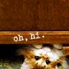 alias: (Kitties: hiiiii)