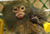 ledilid: (двоє - monkeys)