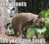 felis_lupus: (plant kitteh)