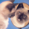 fallingdream: (Cat)
