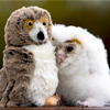 recessional: a small white owlet snuggling a stuffed owl as a poor mother-substitute (personal; yes. just THAT pathetic.)