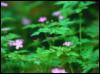 foxyfurs: (Spring)