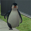 s00: Penguin (pic#2163308)