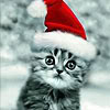 angelshill: (santa cat)