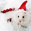 angelshill: (santa rat)