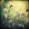 unauwen: (summer)