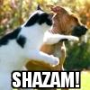 catintheattic: (SHAZAM!)