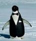 jeshyr: Penguin wearing a tuxedo (Penguin Tuxedo)
