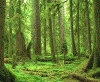 jeshyr: Peaceful rainforest trees (Forest)