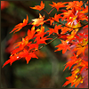 pghkitten: (autumn)