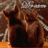 pghkitten: (dream kittens)