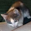 pghkitten: (reading kitten)