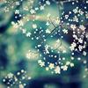dreamlocket: (Blossom)