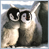 pensnest: two fluffy wuffy baby penguins cuddling (Baby penguins of joy)