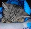 anysia: (Sleeping Loki)
