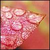alegriagraciela: (raindrops)