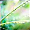 alegriagraciela: (blades of grass)