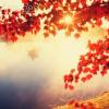 alegriagraciela: (autumn)