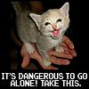 namey: (zelda kitty)
