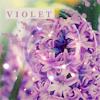 muffinbutton: (Violet)