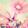 muffinbutton: (Pink!)