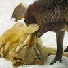 werewolf_hacker: (kisses 2)