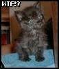 morgandawn: (Cat Kitten WTF?)
