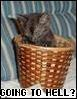 morgandawn: (Cat Basket Going To Hell?)