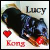 landshark: My dog trying to distroy a kong. (Lucy)