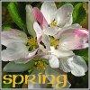weaverbird: (Spring)
