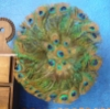 sistermine: Photo of a circular fan of peacock feathers (peacock fan) (Default)