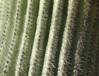 ellarien: cactus (desert)