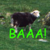 ellarien: sheep, baa! (sheep)