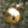 ellarien: christmas ornament on cactus (Christmas)