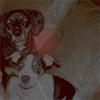 bwhouwant2b: (Angel and Phoenix)
