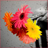 brokensoul: (abstract. colorful bouquet)
