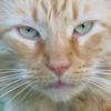 tenaya: (grumpy)