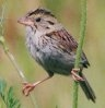 sparrow2000: (sparrow)