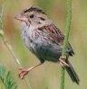 sparrow2000: (Default)