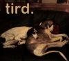 trixtah: (tird)