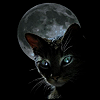 siliconshaman: black cat against the moon (Boo)